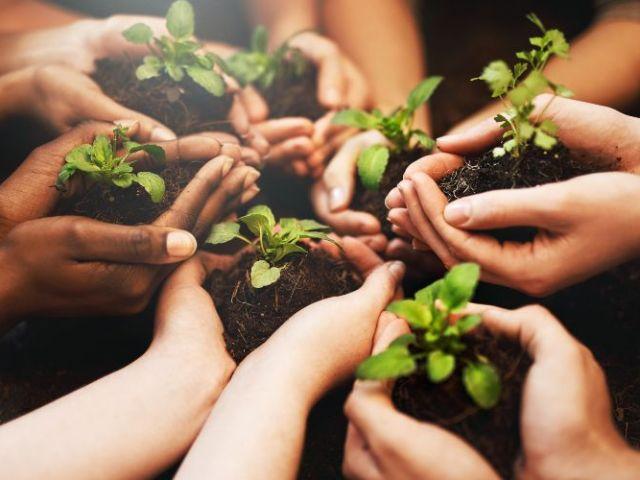La relación entre el cuidado del medio ambiente y la alimentación